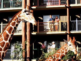 Disney's Animal Kingdom Lodge image 14