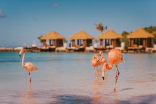 Renaissance Aruba- A Marriott Luxury & Lifestyle