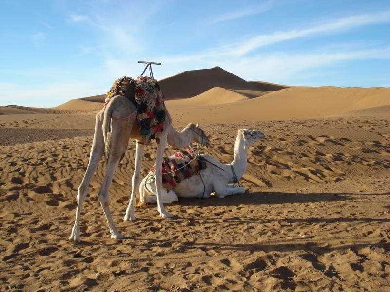 Bivouac Les Dunes De Tinfou -