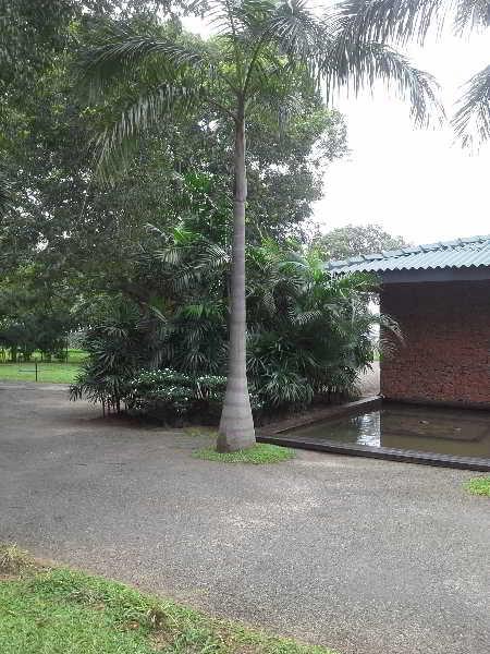 The Lake (Seruwa)