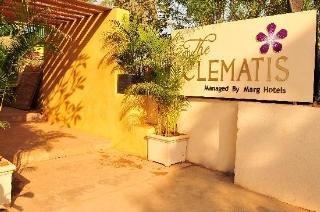 Clematis in Goa, India