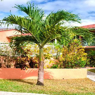 Halcyon Palm in Barbados, Barbados