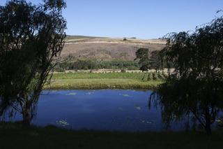 Blue Gum Country Estate