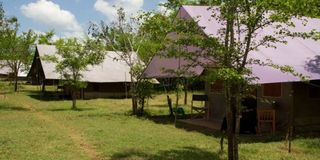 Big Game Camp - Yala