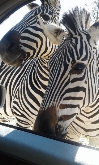 Warthogs Safari Camp