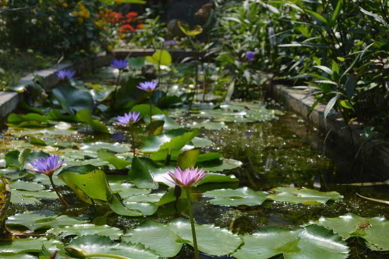 Foto del Hotel Orchid Garden Homestay del viaje vietnam camboya esencial