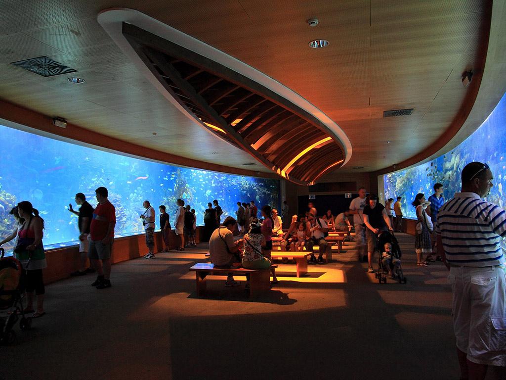 Museo de las ciencias y l 39 oceanogr fic guide go for Hotel oceanografic ninos