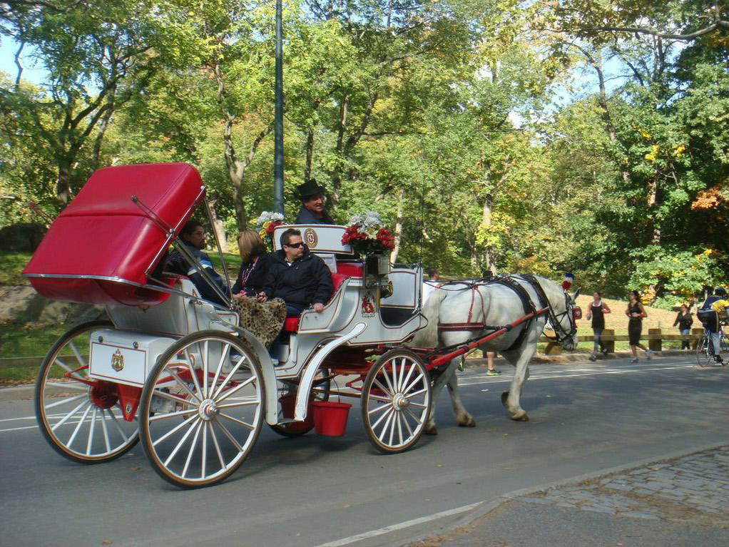 central park horse and carriage tour guide go. Black Bedroom Furniture Sets. Home Design Ideas