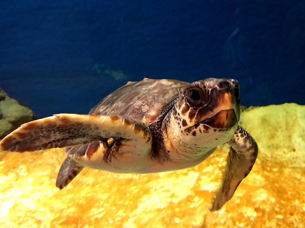 Acuario de sevilla guide go Aquarium familia numerosa