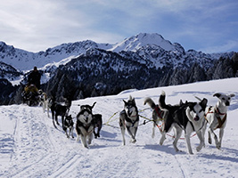 Grandvalira Mushing - Dogsled