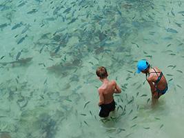 Full Day Coral Island Escapade