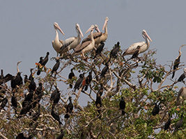 Full Day Bird Sanctuary