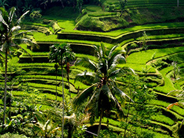 Half Day Ubud And Tampaksiring Culture Tour