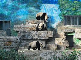 Full Day Essential Beijing: Ancient Beijing and New Olympic Tour
