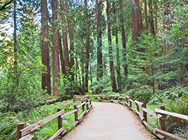 Redwoods and Wine Country Escape