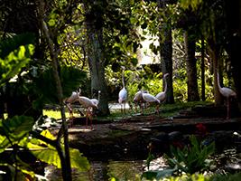 Full Day Bali Bird Park
