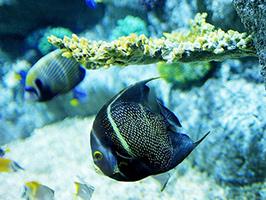 London Sea Life Aquarium - Standard Ticket – Priority Entrance