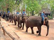 Mahout Training At Mae Tang Elephant Camp From Hotel Inside Chiang Mai City Only
