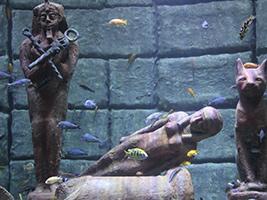 Aquarium Ticket Only