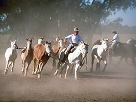 Fiesta Gaucha in Santa Susana