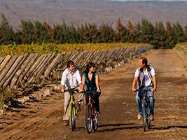 Bike and tasting with regional picada in Zuccardi
