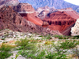 Cafayate (Shared Service)