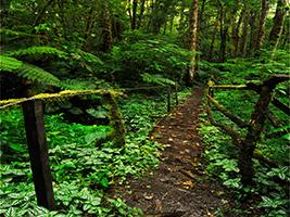 Entrada Camino De Plantación