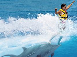 Foto Nado Real Con Delfines En Aquaventura