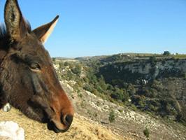 Donkey Safari from Paphos