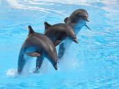 Seaquarium Seal Swim
