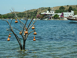Bodrum Peninsula - Local Flavours