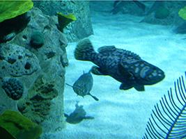 Istanbul aquarium and shopping tour
