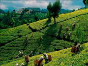 2 Days 1 Night Kandy-Nuwara Eliya