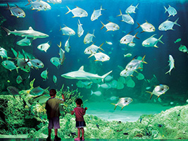Full Day Sea Life Sydney Aquarium