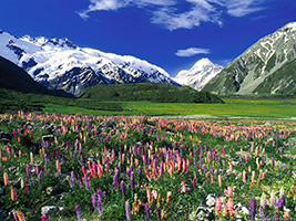 Full Day Queenstown To Christchurch From Hotel Inside Queenstown Only - GS83L
