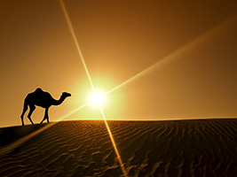 Evening Dubai desert safari