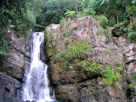 El Yunque National Rainforest Hike