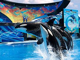 Foto Parques Seaworld En Orlando