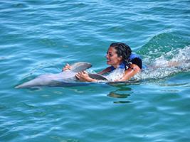 Dolphin Explorer - From Boca Chica