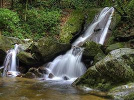 Full Day Kinabalu Park Tour