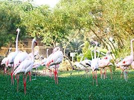 Bahrain flora and fauna tour