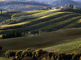 Découverte de Chianti - Montecatini