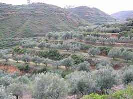 Agricultural Tour