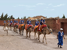 Camel Trek and Quad Bike Tour
