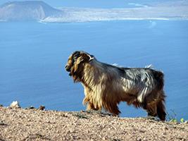 Hiking trails around Lanzarote