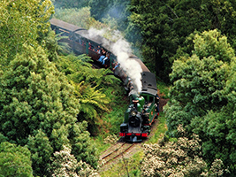 Puffing Billy with Blue Dandenongs