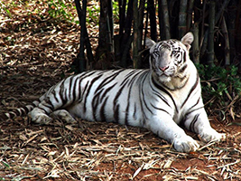 Excursion to Vandalur Zoo - private