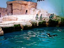 Visit the Ocean Aquarium