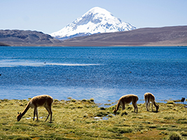 Excursion to Lauca National Park and Chungara Lake - private - Arica