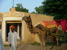 Excursion to Samode and camel ride